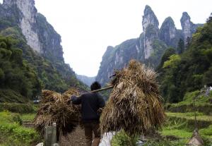 Land crop gatherers
